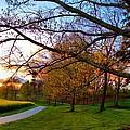 A Walk Through The Canola Fields At Sunset by Carol Montoya