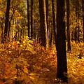 A Walk Through The Woods  by Saija  Lehtonen
