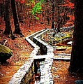 A Walk Through The Woods by Tara Potts