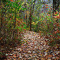 A Walk To Remember by Jeff Mize
