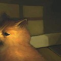 A Warm Corner For Kitty   No.2 by Diane Strain