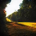 A Warm Michigan Sunrise by Thomas Woolworth