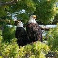 A Watchful Pair by Brenda Jacobs