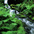 A Waterfall In Redwood National Park by Bennett Barthelemy