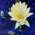 A Waterlily by Marilyn  McNish