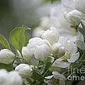 A Whisper Of Spring by Arlene Carmel
