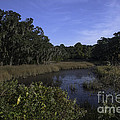 A Wide Expanse Of Marsh by Dale Powell