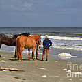 A Windy Day At Hunting Island Beach by Louise Heusinkveld