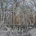 A Winter Scene by Raymond Salani III
