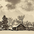A Winter Sky Sepia by Steve Harrington