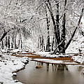 A Winter Walk  by Saija  Lehtonen