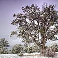 A Winter's Day  by Saija  Lehtonen