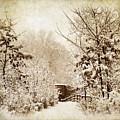 A Winter's Path by Jessica Jenney