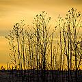 A Winter's Silhouette by Christi Kraft