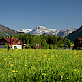 A Woman Walks Through An Alpine Meadow by Robert van Waarden