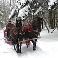 A Wonderful Day For A Sleigh Ride by Peggy  McDonald