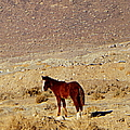 A Young Mustang by Bobbee Rickard