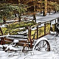 Abandoned In The Snow by Life With Horses
