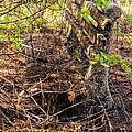 Abandoned Bench by Zina Stromberg