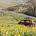 Abandoned Ford Buried In Wildflowers by Athena Mckinzie