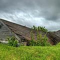 Abandoned In The Storm by Nebojsa Novakovic