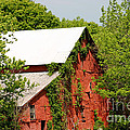 Abandoned Old Barn by Living Color Photography Lorraine Lynch