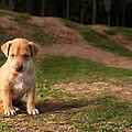 Abandoned Puppy by Howard Klaaste