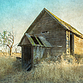 Abandoned Root Cellar by Angie Vogel