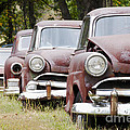Abandoned Rusted Cars by Oscar Gutierrez