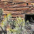 Abandoned Shack by Susan Leonard