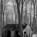 Abandoned Sugar Shack In Black And White by Dominic Labbe