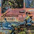 Abandoned Truck by Ashley M Conger