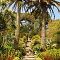 Abbey Gardens Of Tresco On The Isles Of Scilly by Alex Cassels