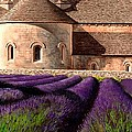 Abbey Lavender by Michael Swanson