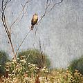 Above The Prairie II by Dale Kincaid