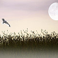 Above The Tall Grass by Tom York Images