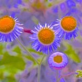 Abstract Blooms by Joe Wyman