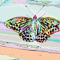 Abstract Butterfly by Marianna Mills