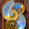 Abstract Chambered Nautilus by Garry Gay