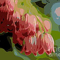 Abstract Coral Bells by Kenny Glotfelty