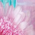 Abstract Daisy by Dale Kincaid
