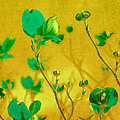 Abstract Dogwood by Bonnie Bruno
