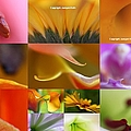 Abstract Fine Art Flower Photography by Juergen Roth