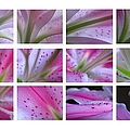 Abstract Flower Fine Art Photography by Juergen Roth
