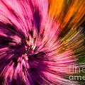 Abstract Flower Spiral by Sarah Cheriton-Jones