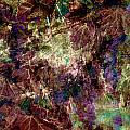Abstract Grapes On Vine Number Four by Bob Coates