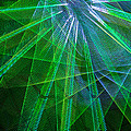 Abstract Green Lights by Garry Gay