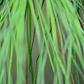Abstract Green Pine by Maria Urso