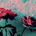 Abstract Hdr Roses by Kathy Barney