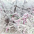 Abstract Ice Covered Shrubs by Oleksiy Maksymenko
